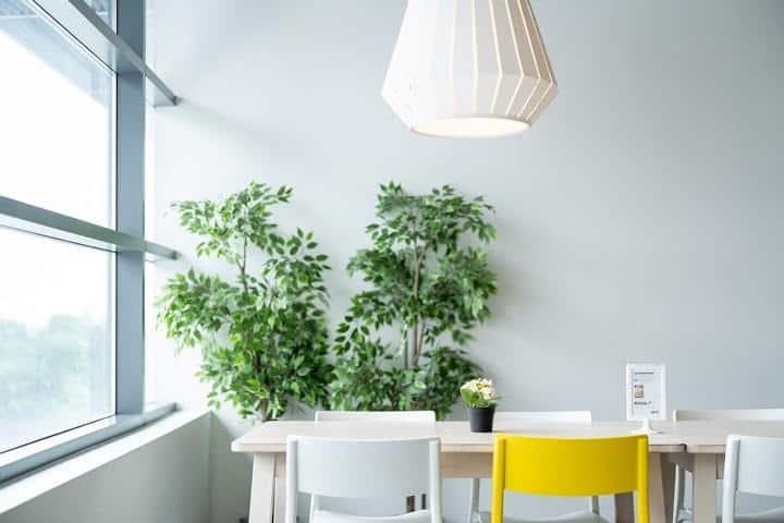 Zimmerpflanzen und Esstisch