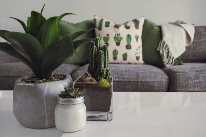 Feng Shui Pflanzen im Wohnzimmer