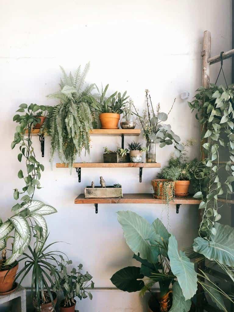 Pflanzenregal mit mehreren Pflanzen