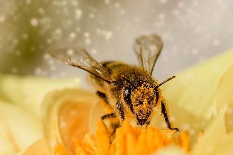 Eine Biene auf der Blume