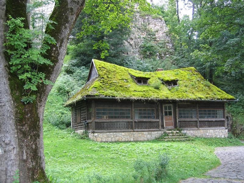 Eine vermoste Waldhütte