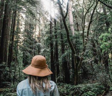 Im Wald ist das Element Holz spürbar